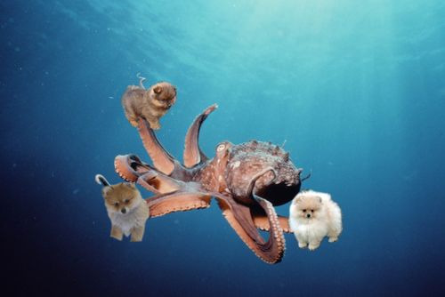 Octopom